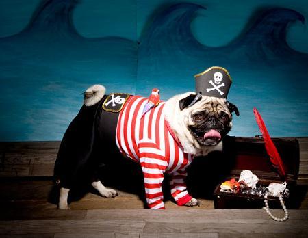 Disfraz para perro de pirata