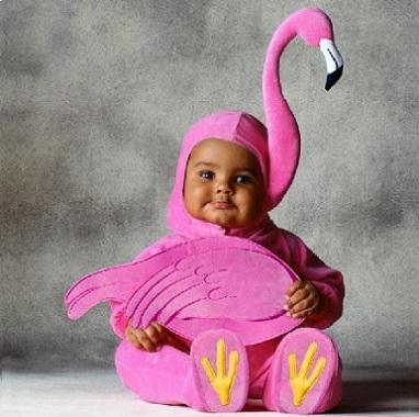 bebé flamenco