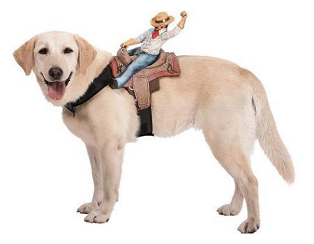 Disfraz para perro de caballo
