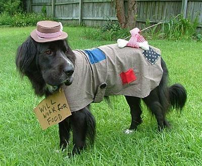 Disfraz para perro de vagabundo