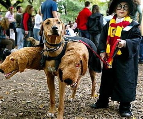 disfraz halloween niño casero harry potter